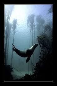 seal-uner-water